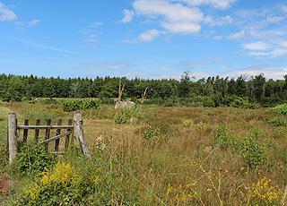 I kan gå eller cykle i den smukke Rutsker Plantage, der omgiver Rutsker Højlyng