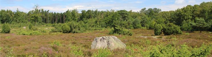 Ferieområdet Rutsker Højlyng er omgivet af den naturskønne Rutsker Plantage