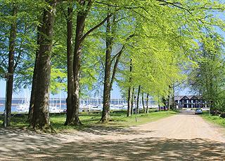 Smuk skov bag ferielejlighederne og lystbådehavnen i Skive