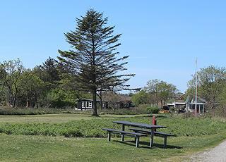 Sommerhuse i grønne omgivelser bag stranden i Søndbjerg Strand