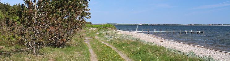Dejlige skovområder med sommerhuse omkranser badestranden i Søndbjerg Strand
