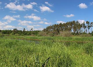 Gudenåen er ved Truust omgivet af skov og grønne områder