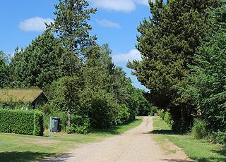 Hyggelig sommerhusvej med høje træer og afskærmede huse i Truust