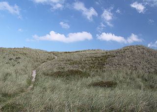 Klitlandskabet bag stranden i Vangså