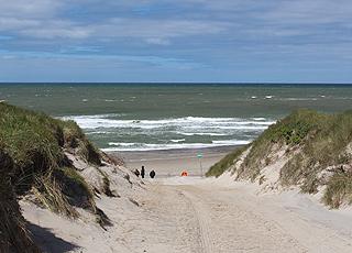 Adgang til den skønne sandstrand bag de høje klitter i Vedersø Klit