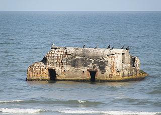 En bunkerrest fungerer som fuglefjeld ved Vigsø