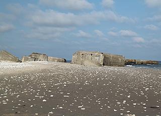 Strandskaller i alle afskygninger ved bunkerne på stranden i Vigsø