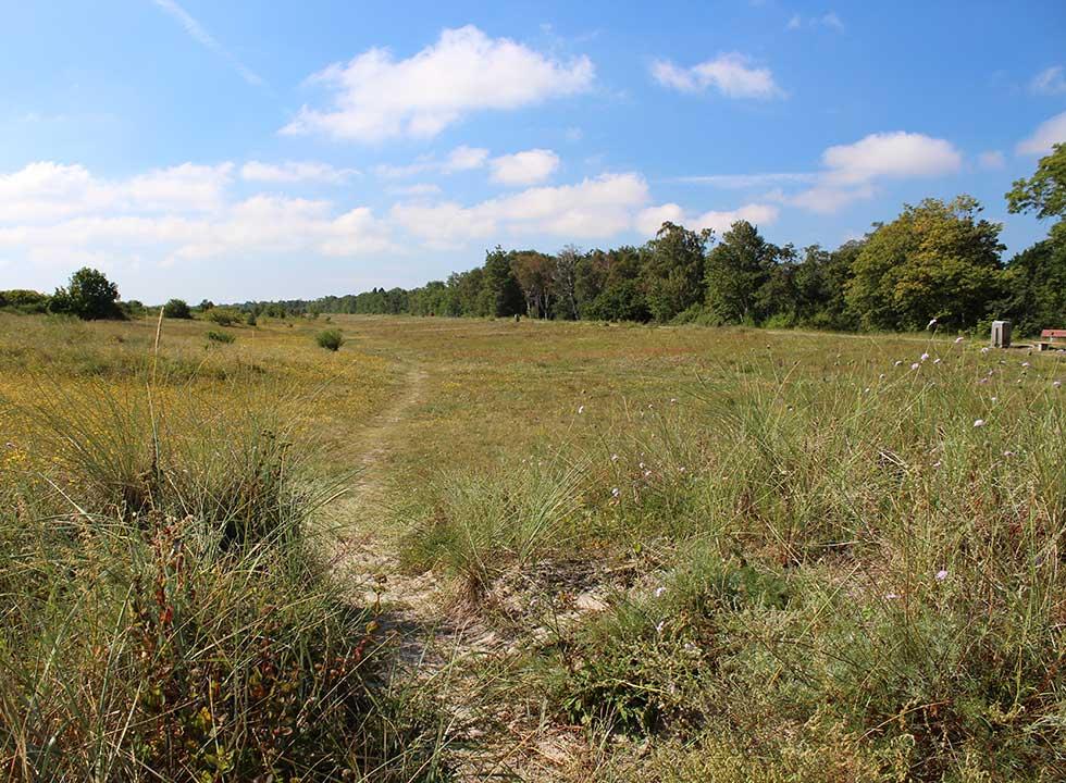 Schöne Naturlandschaft zwischen den Ferienhausgebieten und dem Badestrand an der Ostküste von Falster