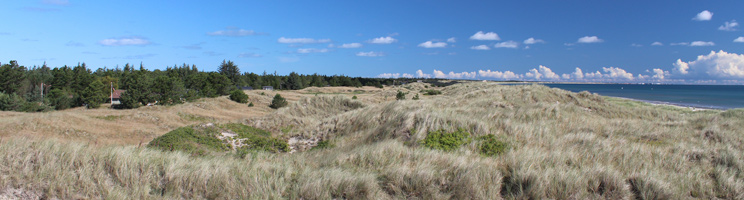 Dünenlandschaften, Wald und Ferienhäuser hinter dem Strand von Ålbæk
