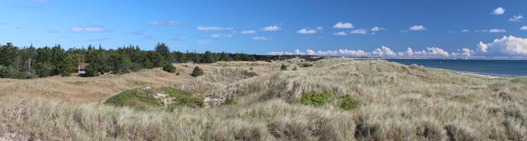 Klitlandskaber, skov og sommerhuse bag stranden i Ålbæk