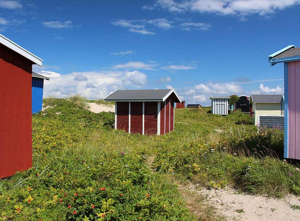 Farbenprächtige Badehäuser in der Dünenlandschaft hinter dem Strand von Tisvildeleje