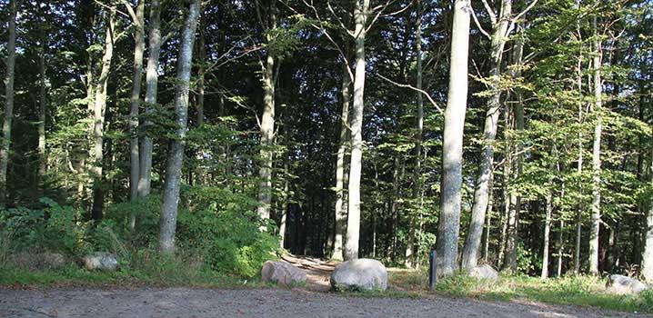 Skov med høje træer og en stor sten i midten. Grussti i forgrunden