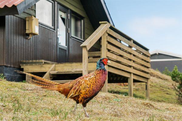 Sommerhus SOL-28-4222 i Fanø, Rindby til 4 personer - billede 31996300
