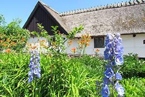 Sommer på Ballerup Museum