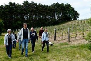 Rundtur på vinmarker