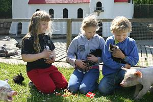 The domestic animals together with children in the park
