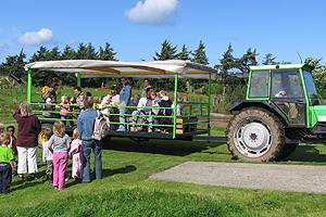 Go on a drive with the tractor wagon