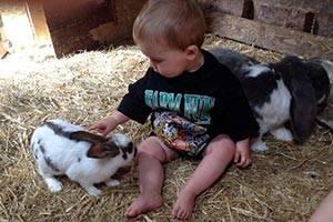 Baby med kaniner