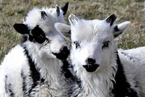 Søde dyr og hygge for hele familien i Farm Fun Hirtshals