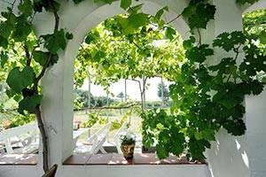 Vinranker og siddepladser i drivhus