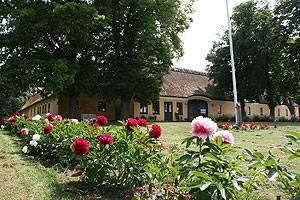 Greve Museum sommer