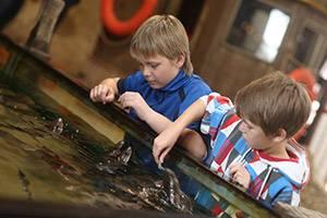 Twee jongens aaien vissen in het aanraakbassin