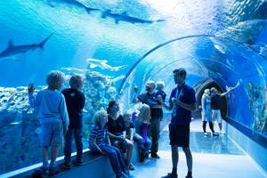 The shark tunnel in Den Blå Planet