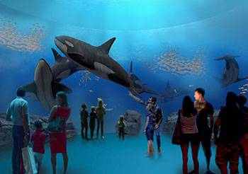 Come close to a killer whale in Nordsøen Oceanarium