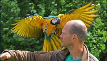Stor papegøje Nordsjællands Fuglepark