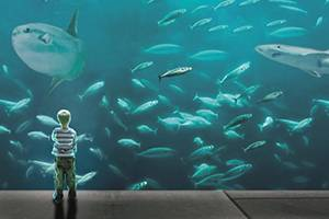 Little boy watches fish in large numbers