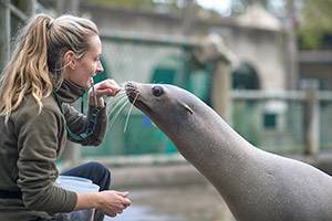 Feeding of the sea lions