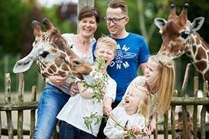 Familie fodrer giraffer