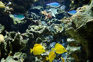 Experience tropical fish in beautiful colours in Randers Regnskov