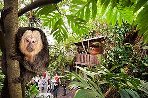 Experience the climbing monkeys in the tropical trees in Randers Regnskov