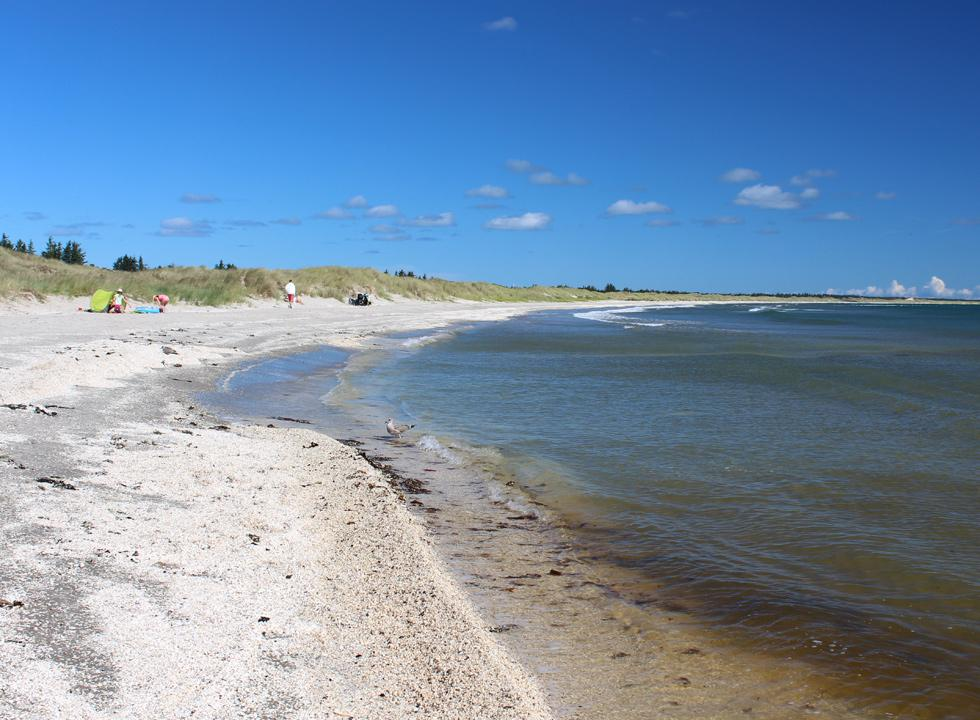 Lovely bathing beach with dunes in the holiday home area Ålbæk