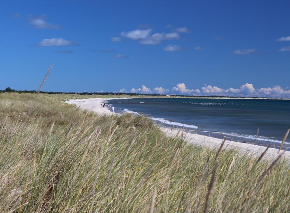 View of the lovely bathing beach in Ålbæk from the dunes