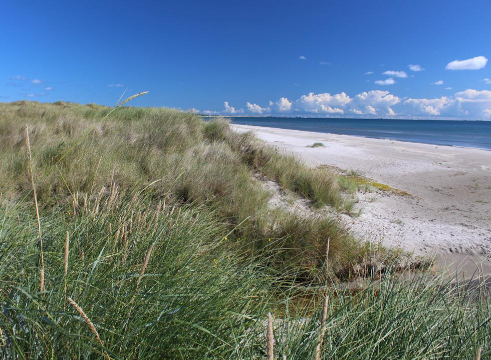 View of the beach in Ålbæk from the dunes