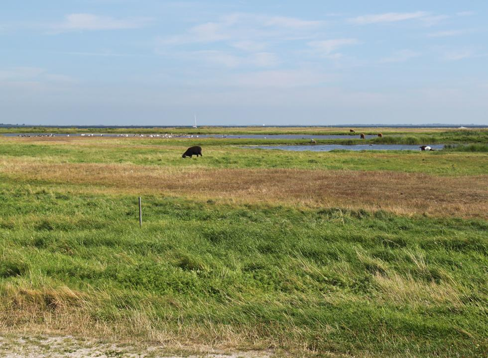 Fields and wetlands behind the beach huts and the beach of Ærøskøbing