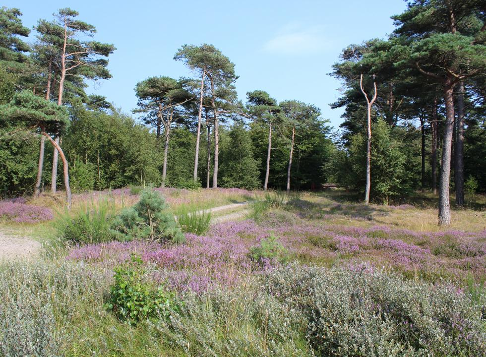 The idyllic forest area, which surrounds the holiday homes in Blåvand, Ho