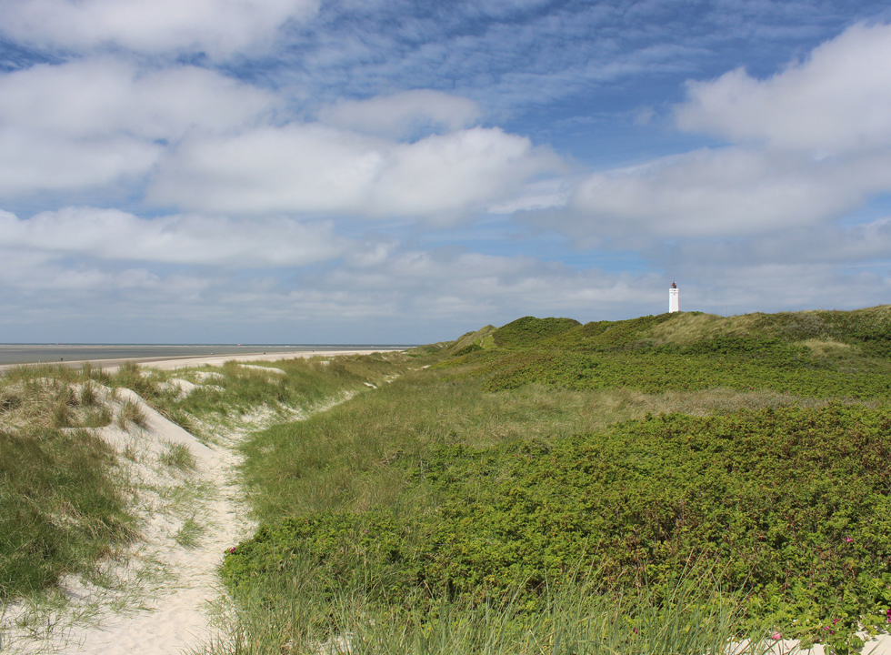 Path along the sea, through the green dunes, and the lighthouse Blaavand Fyr in the background