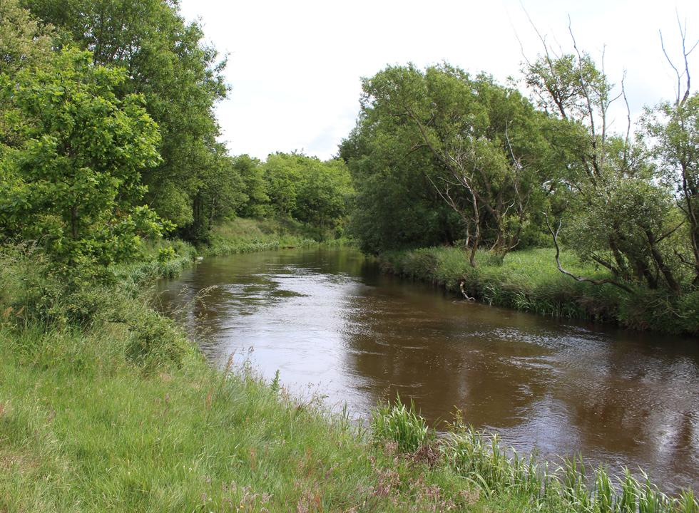 The wide stream Skjern Å by the holiday homes in Borris is surrounded by scenic nature