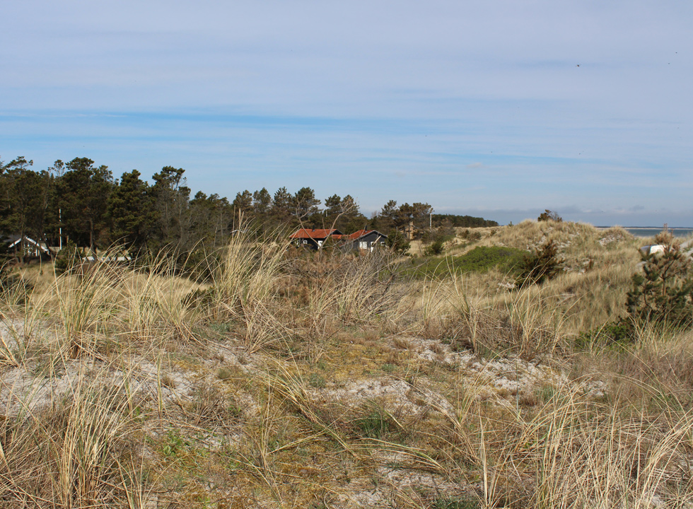 Holiday homes behind the dunes of the beach in the holiday area Bratten