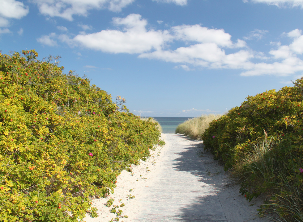 The path, which leads down to the beach, in the holiday home area Bratten