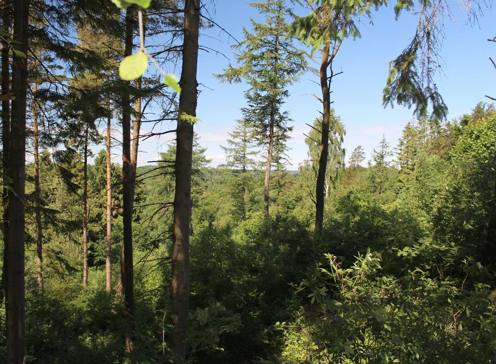 View from one of the holiday homes in the very hilly forest area behind Bryrup