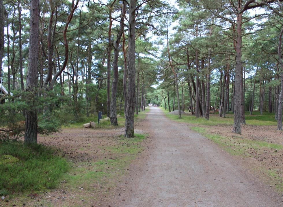 A road with holiday homes in forest surroundings behind the beach of Dueodde