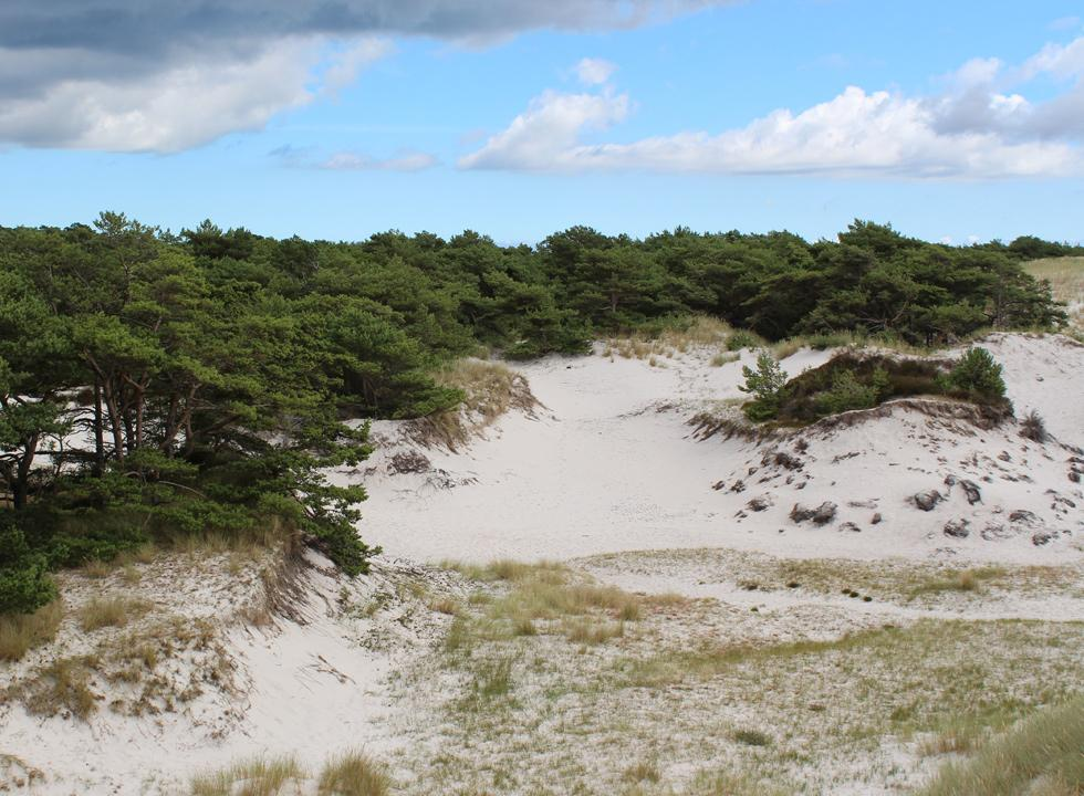 Unique dune landscape with trees behind the beach in Dueodde