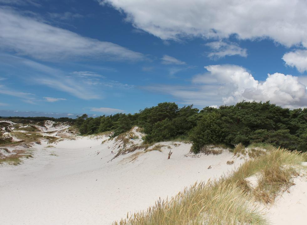 Desert-like dune area by the holiday home area in Dueodde