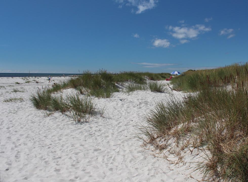 View of the beach from the small dunes in Dueodde