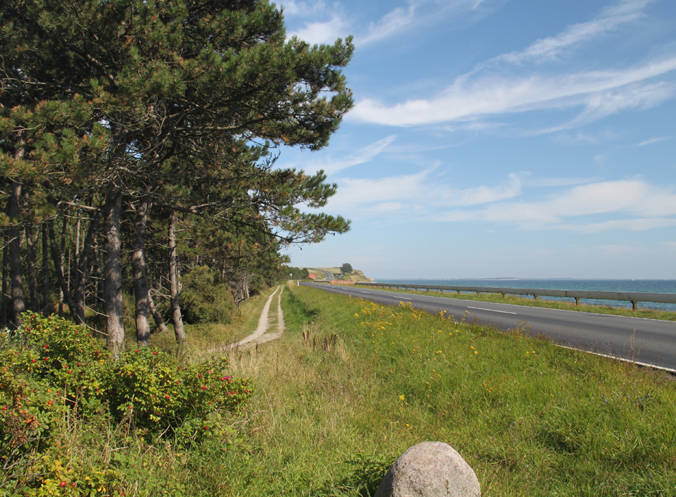 Beautiful forest areas behind the shore in Dunkær on Ærø