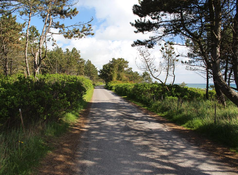 The holiday homes of Elsegårde are situated between the high trees, close to the beach